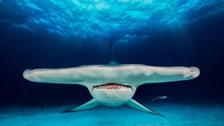 Лучшие фотографии подводного мира были выставлены на конкурсе и уже объявлен победитель…
