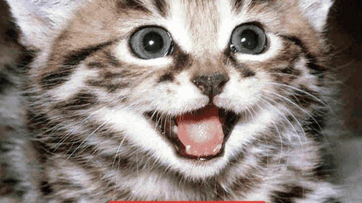 Вот как подзывают кошек в разных странах мира