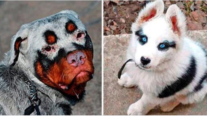 Животные с необычным окрасом, над которым природа колдовала с удвоенной силой