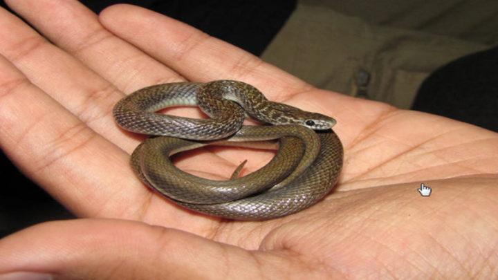 «Не меняйте своей сущности только потому, что кто-то ранил вас» — мудрейшая притча о змее