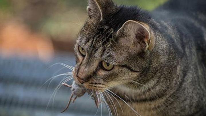 15 неожиданных фактов о котах